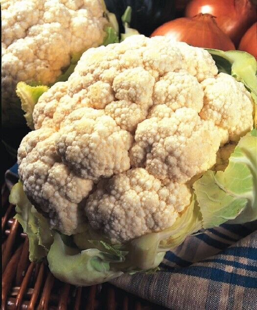 (280)'KINGS' QUALITY cauliflower all year round- fine seeds- Vegetable