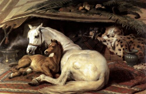 Horses in The Arab Tent by Edwin Landseer Animals Repro choose Canvas or Paper