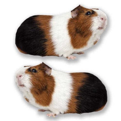 2 x 20cm Cute Tri-Colour Guinea Pig Stickers Laptop Tablet Car Kids Gift #6595