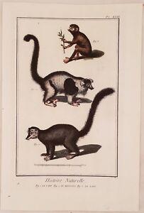 LORIS-MANGUSTA-LEMURE-LORIS-MONGOOSE-LEMUR-ZOOLOGIA-ZOOLOGY-ANTONIO-BARATTI-1770