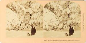 Stereo Natura Neige Montagne Cane, Foto Vintage Albumina PL62L3