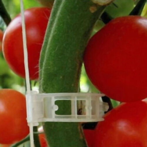 100pcs veggie garden plant support clips for trellis twine greenhouse  VQ