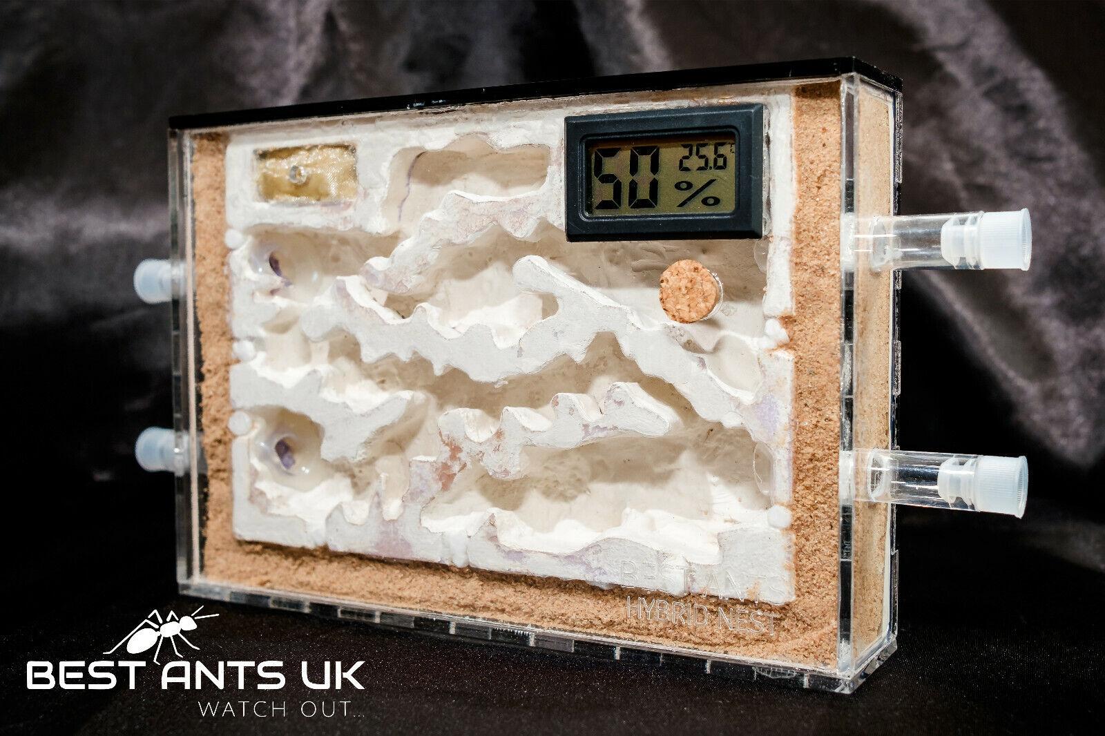 ANT Combo Hybrid nido Ant Farm A5 ANT formicarium  Umidità Misuratore della temperatura