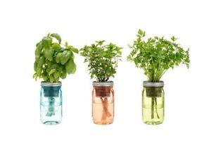 Modern Sprout Garden Jar - Grow with Self Watering Indoor ...