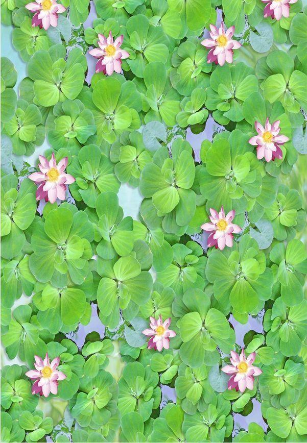 3D Fisch Blume grün 920 Fototapeten Wandbild Fototapete Bild Tapete Familie