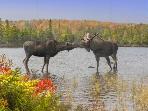 moose kissing deer elk wildlife mountain Colorado ceramic tile mural backsplash