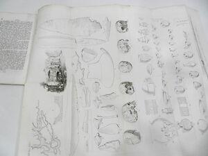 TRES-RARE-DECOUVERTES-PALEONTOLOGIQUES-DANS-LA-CAMPAGNE-ROMAINE-EO-1867