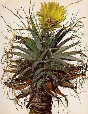 Vintage Cactus Print Botanical Print Cactus Illustration Agave Cactus #1411