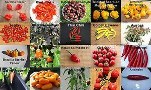 20-Sorten-Chili-Samen-Carolina-Reaper-Bhut-Jolokia-Habanero-Moruga-je-10-st