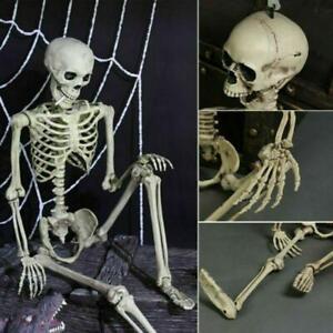40CM-Life-Size-Human-Skeleton-Model-Medical-Anatomical-Posable-Movable-Props-lo