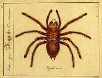 Vintage French Mygale Tarantula Spider 3 Sizes Quilting Fabric Block