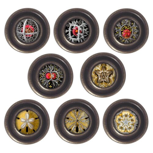 Brass or Pewter Knobs Gothic 32mm Cupboard Drawer Door Handles Decorated