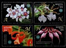 Orchideen. 4W. Weißrußland 2016