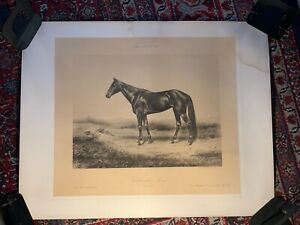 Rare Race Horse Victorian Thoroughbred Americana Trotters Schreiber Photography1