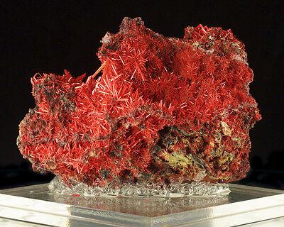 "4.4"" Spiky Red Orange CROCOITE Sharply Terminated Crystals Tasmania for sale"