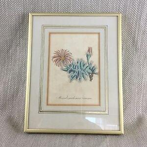 1814-Antico-Stampa-con-Cornice-Botanico-Mano-Colorato-Incisione-Originale-Curtis