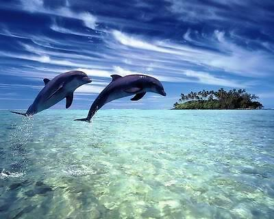 Dolphins At Ocean Art Poster Print New