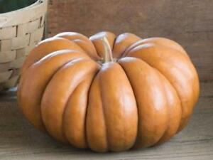 Seeds-Pumpkin-Muscat-De-Provence-Giant-Vegetable-Organic-Heirloom-Russia-Ukraine