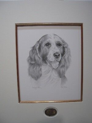 Dogs Springer Spaniel Limited Edition Print of Original Painting by Sue Barratt