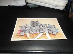 Blue Persian Chatons. Nous sommes quatre. Panier. MABEL GEAR. Chats et Chatons