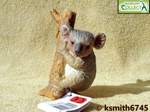 CollectA Arrampicata KOALA solido in plastica giocattolo Wild Zoo Animale Australiano NUOVO
