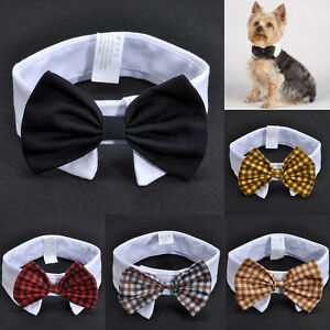Amazing Bow Tie Bow Adorable Dog - s-l300  Image_555989  .jpg