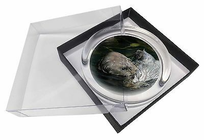 Floating Otter Glass Paperweight in Gift Box Christmas Present AO-3PW