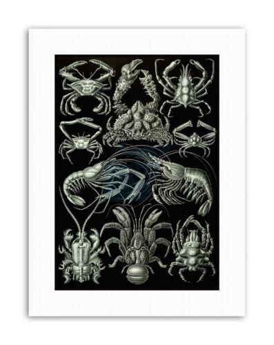 CRUSTACEAN CRAB LOBSTER ERNST HAECKEL GERMANY Nature Biology Canvas art Prints