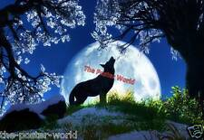 Set Of 5 Beautiful Wolf Highlands Wild Nature Animals Poster Wall Art Print