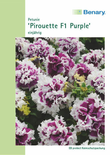 Benary Petunia hybrida Pirouette Purple