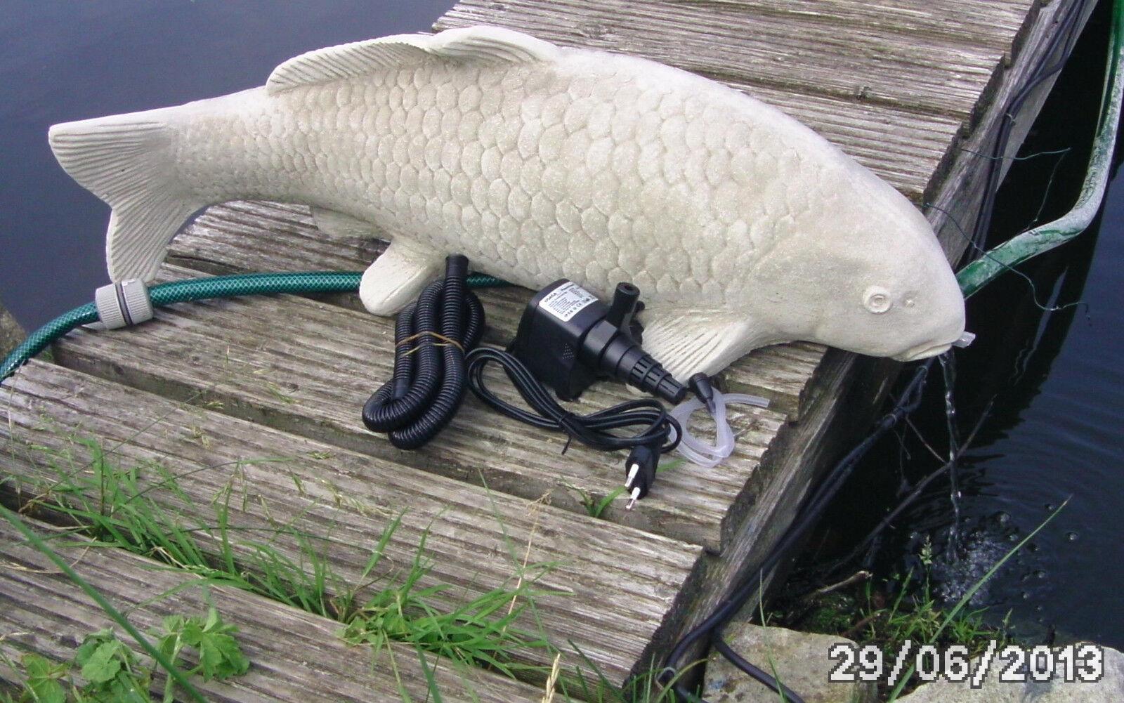 Soragoi Koi ca.75 cm und ca. 20-25 kg Steinkoi sehr schwer mit Pumpe