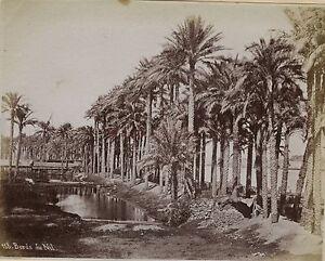Egitto Foto Albumina Stampa Verso 1890, IN Piccolo Formato