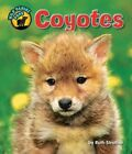 Coyotes by Ruth Strother (Hardback, 2014)
