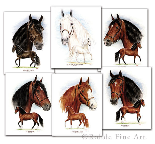 PASO FINO HORSE EQUINE ART set of 6 FAMOUS STALLIONS - Rohde - DEAL