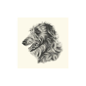 Deerhound Dog Show Ring Number Clip Pin Breed