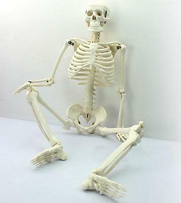 New 45CM Human Anatomical Anatomy Skeleton Medical Teaching Model Fexible &XG$