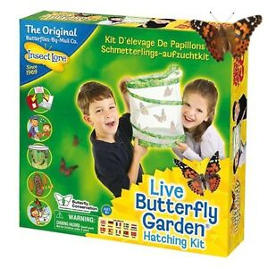 Live-Butterfly-Garden-Hatching-Kit-by-Insect-Lore-Ideal-for-all-the-family