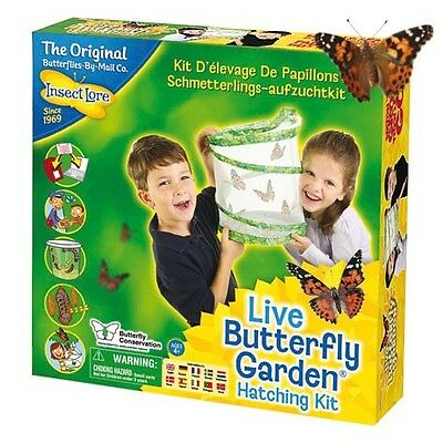 Live Butterfly Garden Hatching Kit by Insect Lore.  Ideal for all the family.