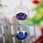 Clear Ball Glass Hanging Vase Bottle Terrarium Container Planter Decor