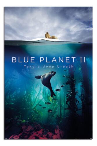 BBC Blue Planet 2 Take A Deep Breath Poster New Maxi Size 36 x 24 Inch