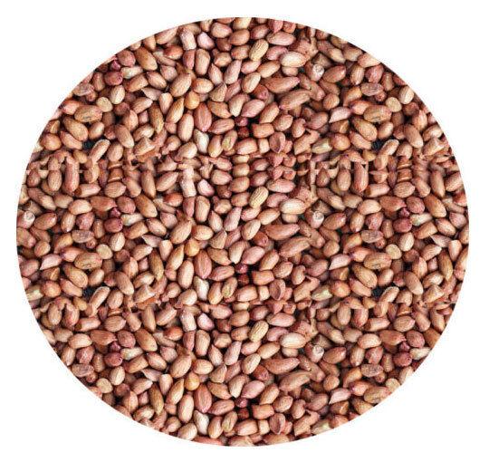 WHOLE PEANUTS 500g  Garden Wild Bird Seed Feed Food Of Nuts Garden Bird