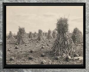 Charming-Early-1900-039-s-Corn-amp-Pumpkin-Harvest-Antique-5x7-Photo-Print