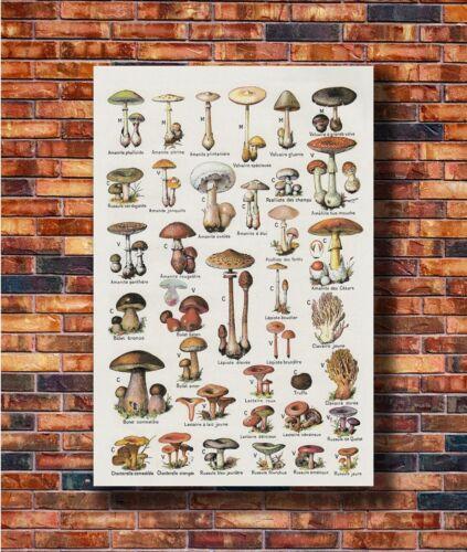Mushroom Chart Biology Education Silk Art Poster Y2021 21 36x24 40x27