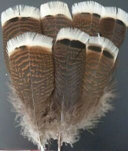 15-20 cm 10 PCS Natural Precious Wild Turkey Tail Feathers 6-8 Inches