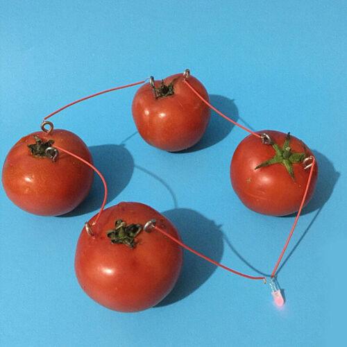 1 Set Children Bio Energy Science Kit Fruit Supply Electricity Experiments T ZSH