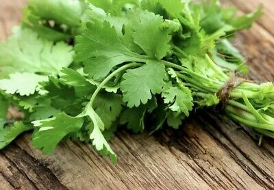 Coriander CILANTRO Seeds Microgreens Leisure Heirloom Chinese Parsley Bulk Herbs