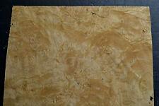 Chestnut Burl Raw Wood Veneer Sheet 135 X 152 Inches 142nd Thick I4682 36