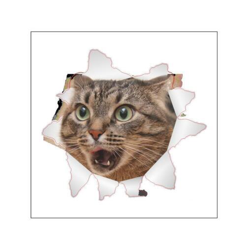 14200 Cat Vivid 3D Smashed Switch Wall Sticker Bathroom Kicthen Decorative //Neu