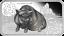 2019 YEAR OF THE PIG LUNAR CALENDAR 1OZ SILVER PROOF 4-COIN SET Rectangular