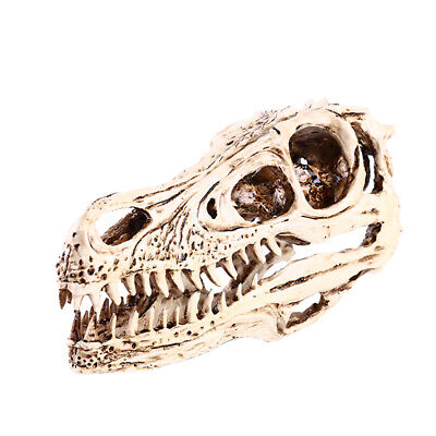 Resin Fox Skull Animal Collectibles Gift Realistic Medical Teach Model WHT